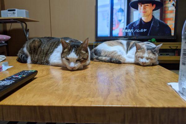 今週のネコたち 寝姿特集