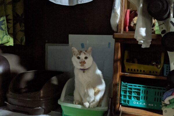 今週のネコ達 トイレ姿特集